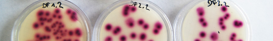 AII3. Qualitat i diversitat microbiològica